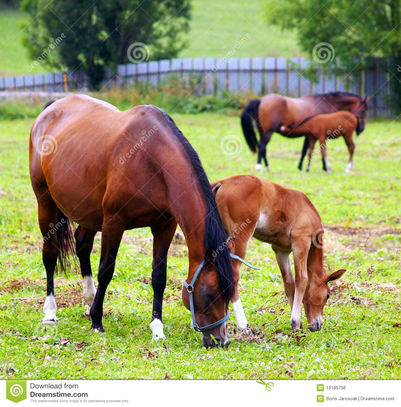 Horses grazing on the field.