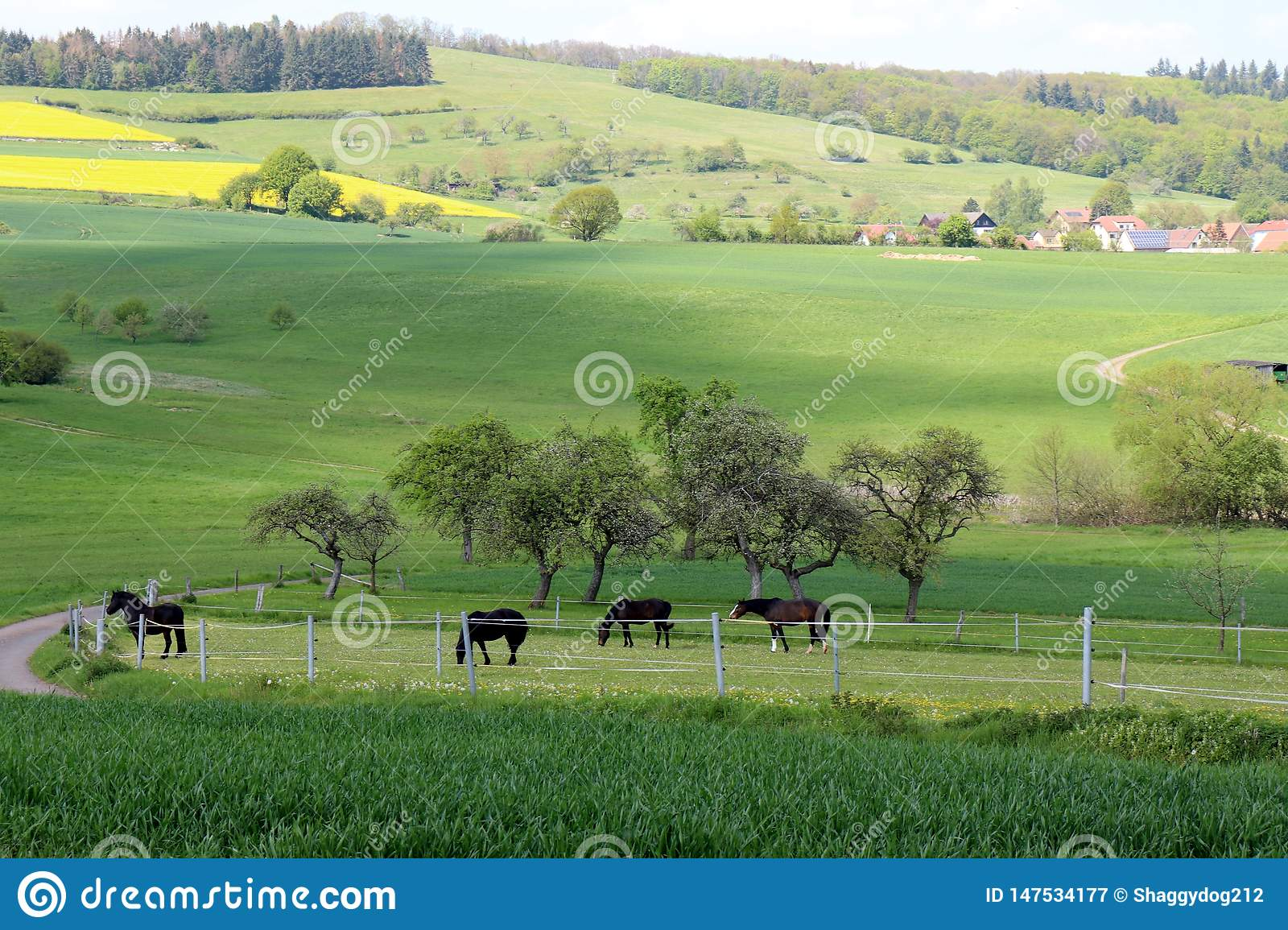 Horses grazing in a pasture in Germany