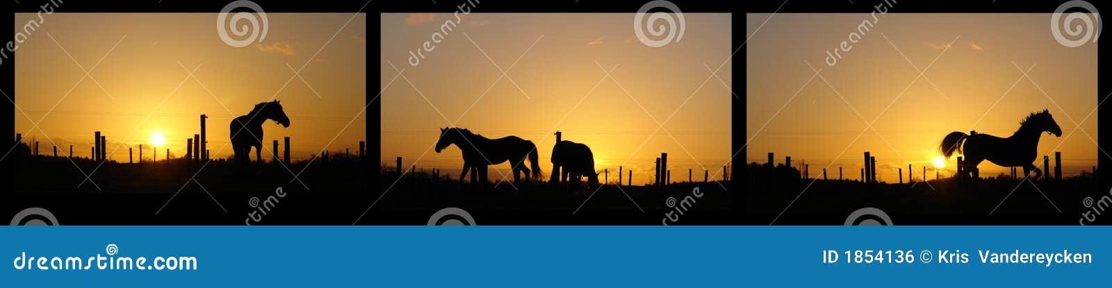 Horses on horizon backlit by sunset
