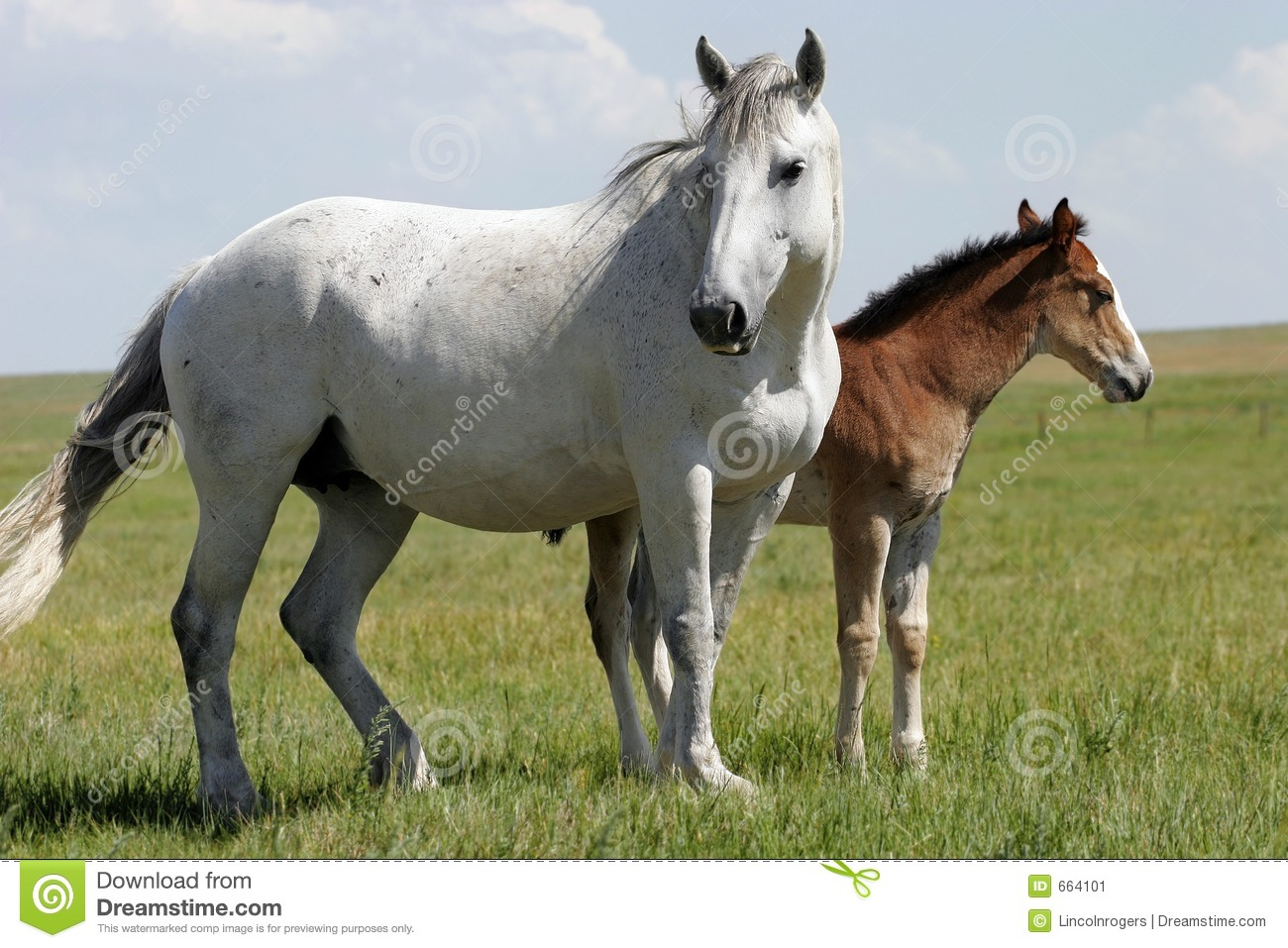 Horses - Mare and Baby (wide)
