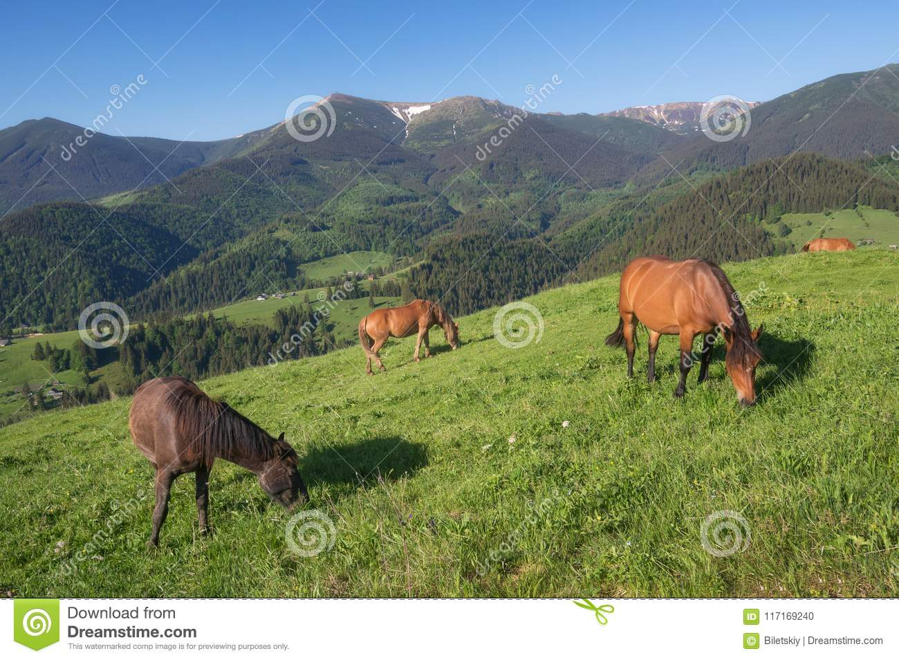 Horses On The Mountain Field Stock Photo Image Of Green