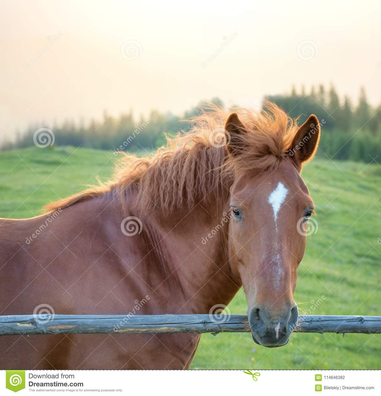 Horses In The Mountain Field During Sunset Stock Photo