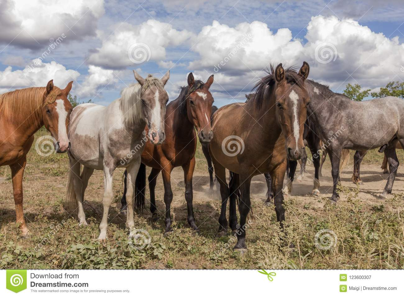 Herd of horses on the pasture land