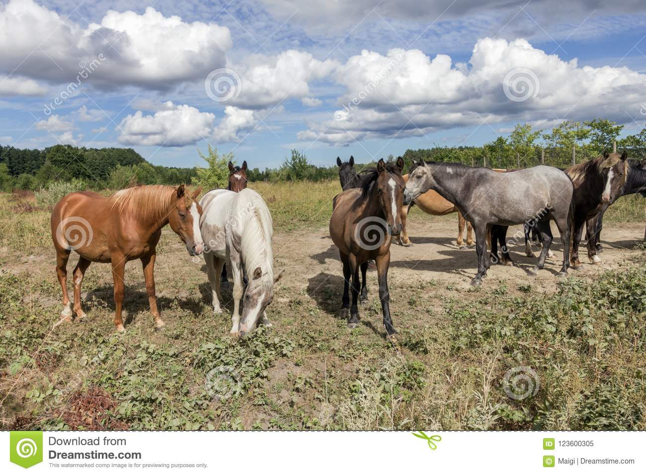 Download Horses on the pasture land stock image. Image of country - 123600305