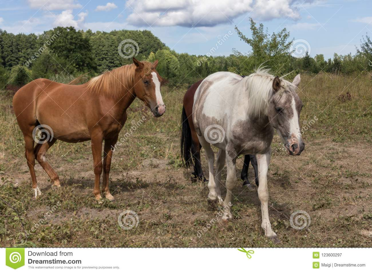 Download Horses on the pasture land stock image. Image of farming - 123600297
