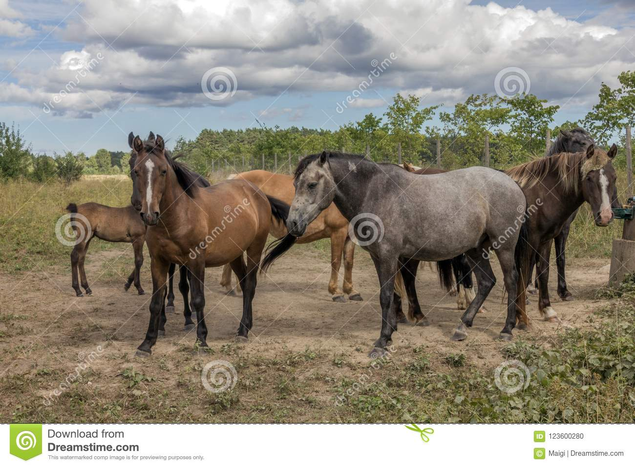Download Horses on the pasture land stock photo. Image of farming - 123600280