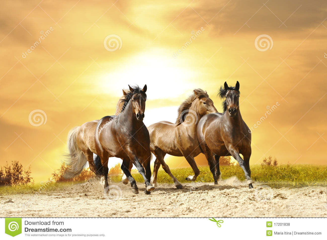 Horses Run Royalty Free Stock Photos - Image: 17201838