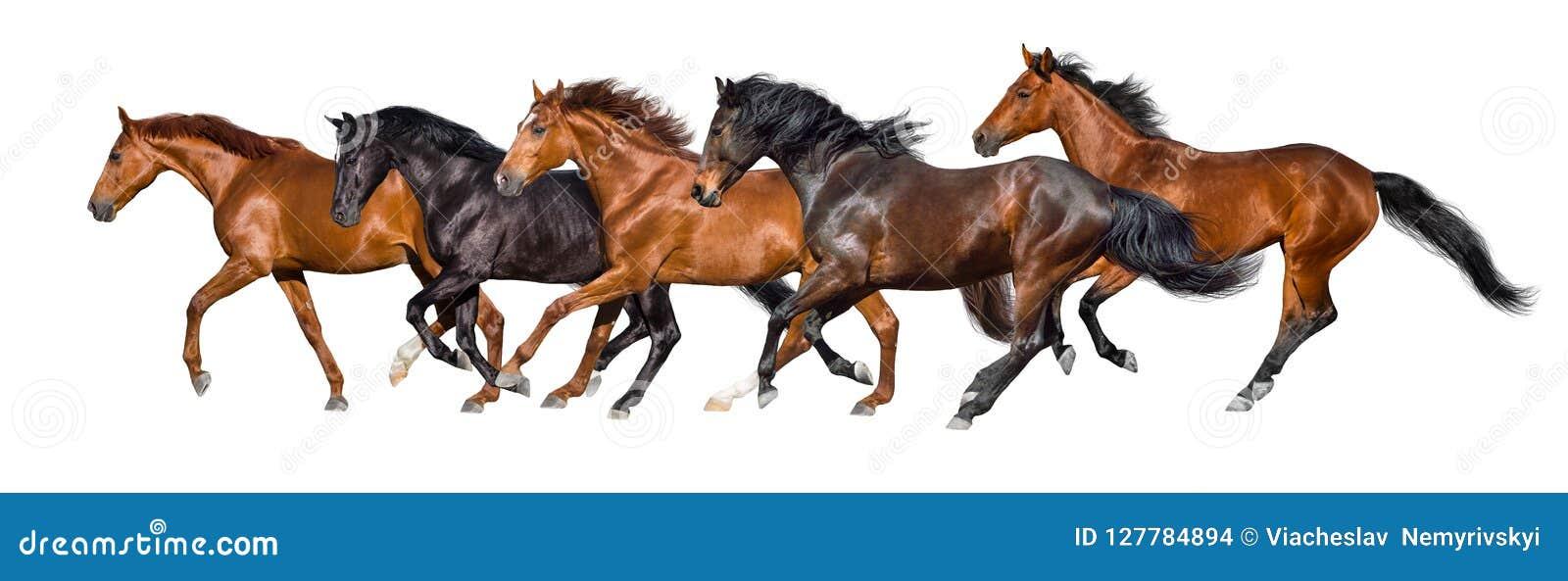 Horses run isolated