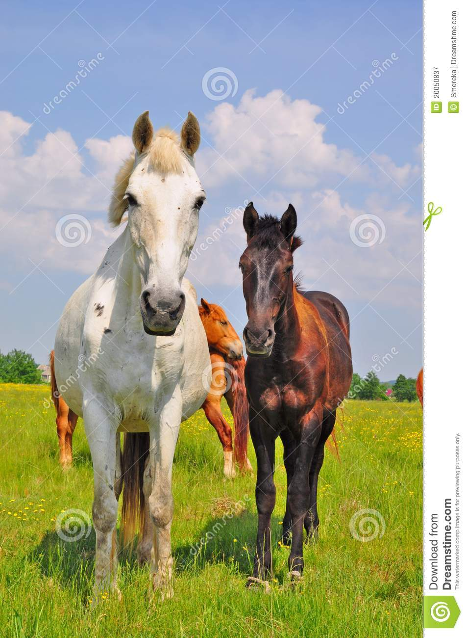 Horses On A Summer Pasture Royalty Free Stock Photography