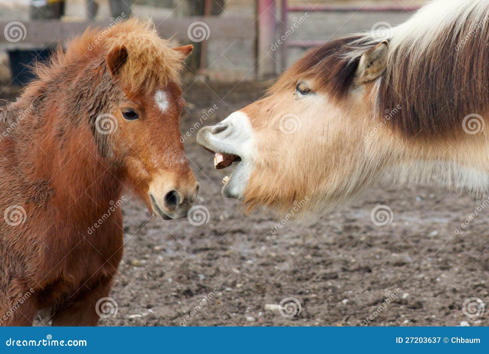 Horses Talking Royalty Free Stock Photography