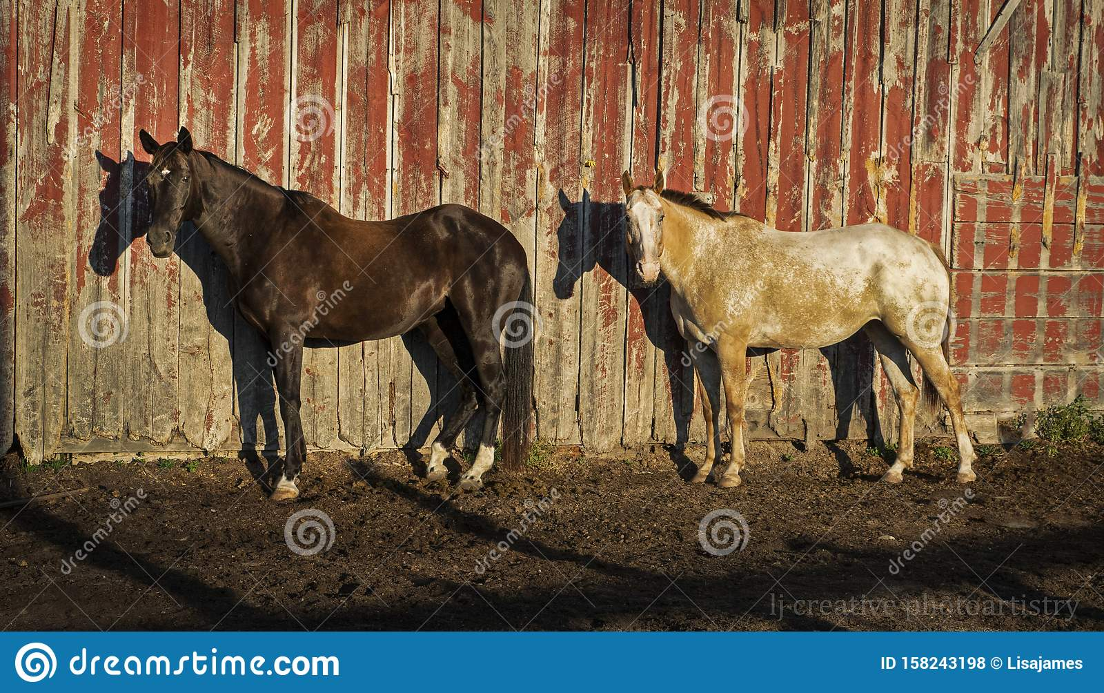 Horses Together In Their Paddock Stock Photo Image Of Coastline Surf 158243198