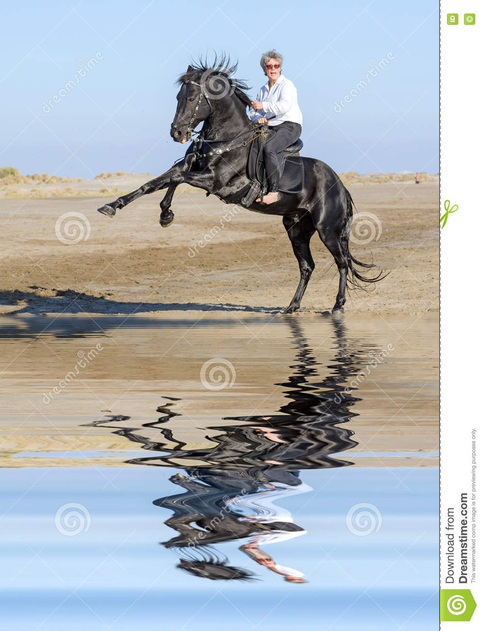 Horsewoman and rearing stallion