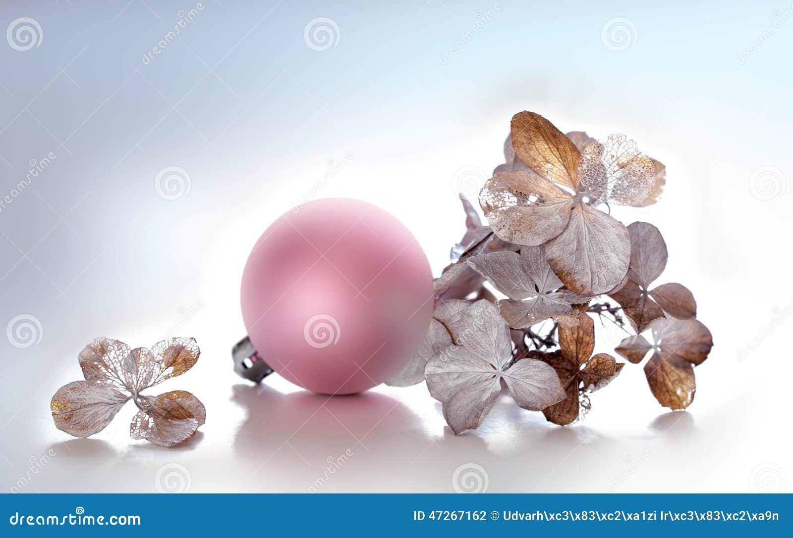 Hortênsia e esfera cor-de-rosa do Natal