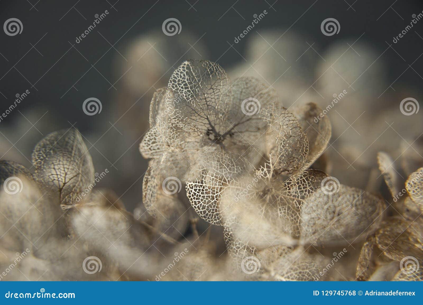 Hortênsia secada ou bordado extremamente refinado