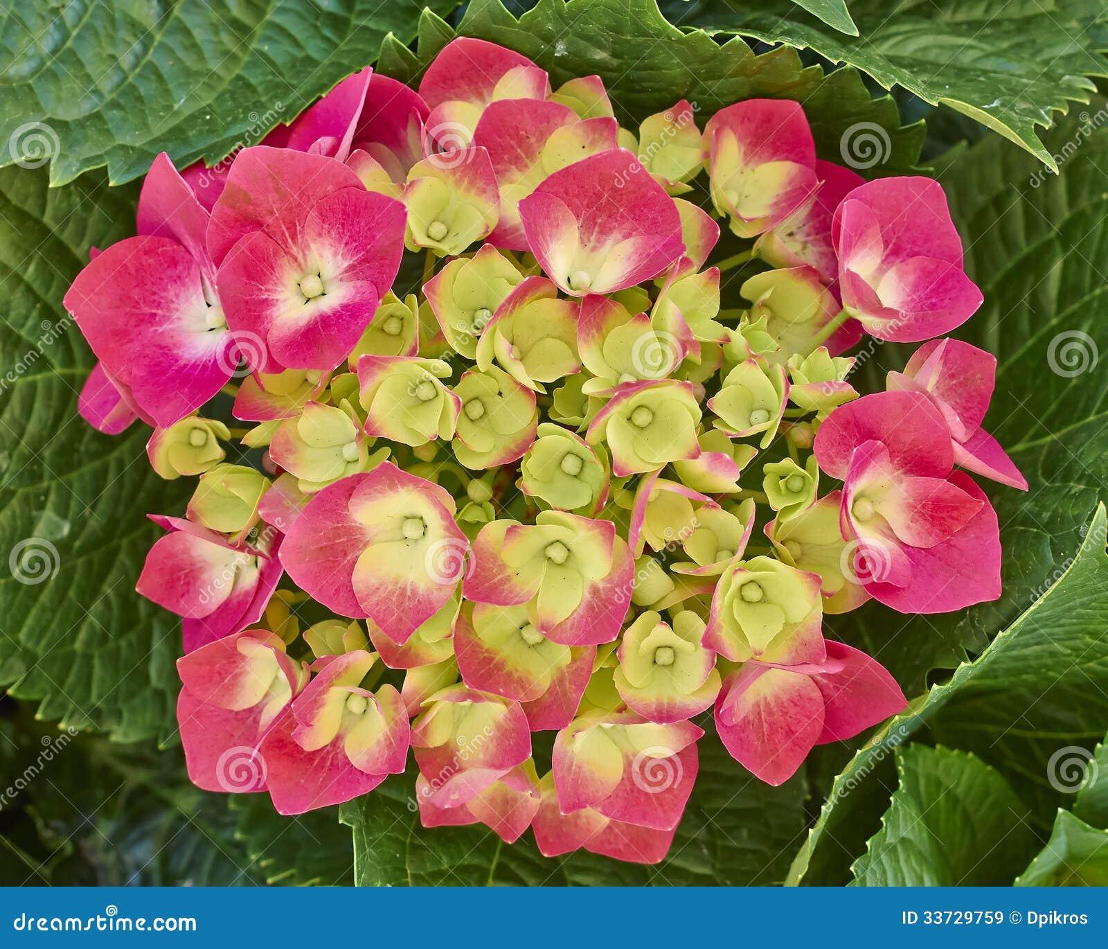 Hortensia цветет естественный букет