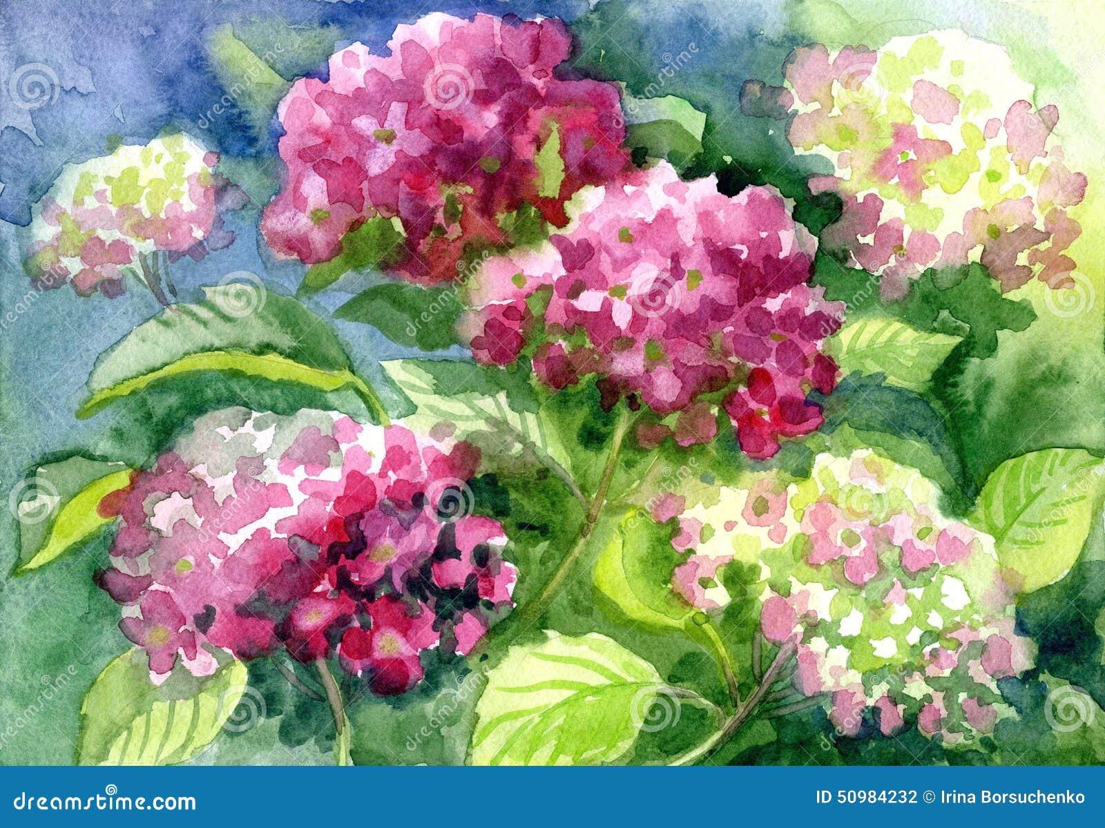 hortensias de dibujo papel color de agua fotografa de archivo