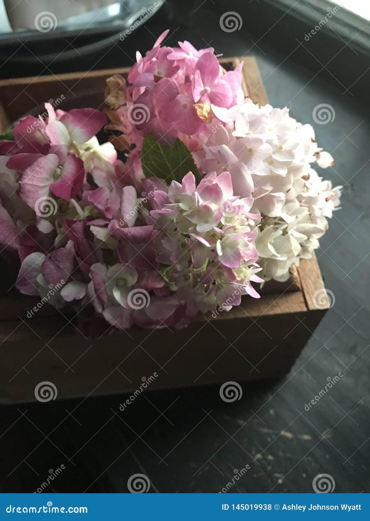 Hortensias roses dans la boîte en bois