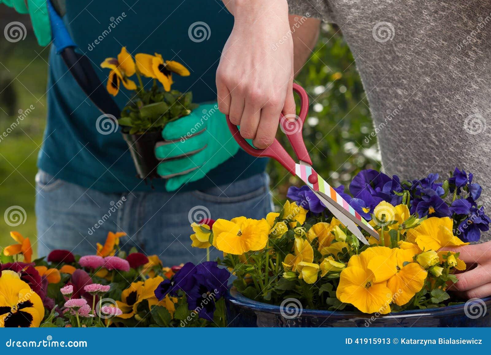 Horticultores que plantan las flores