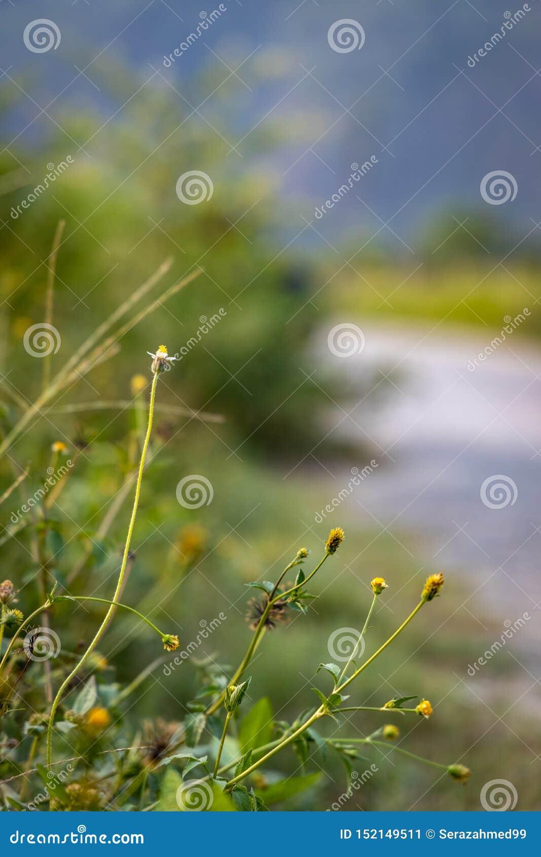 Horticulture sauvage minuscule à côté de la route