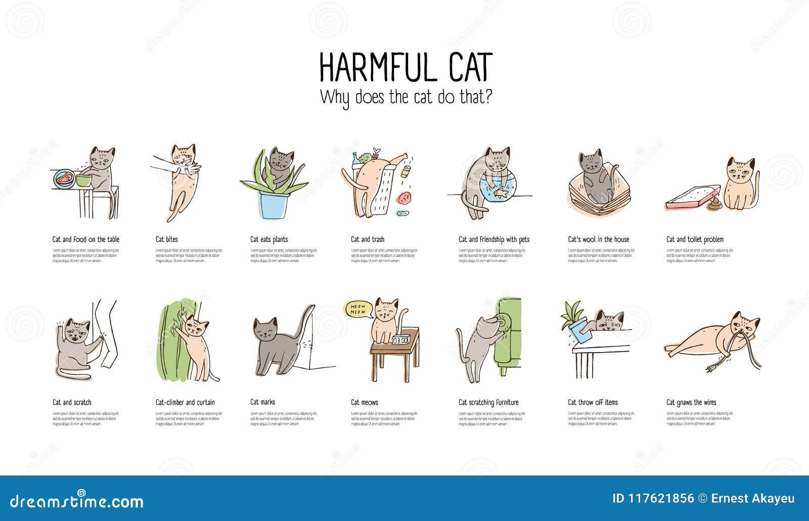 Horyzontalny sztandar z niegrzecznym kotem robi różnorodnym rzeczom - kraść jedzenie, chrobotliwy meble, objadanie depeszuje, mio
