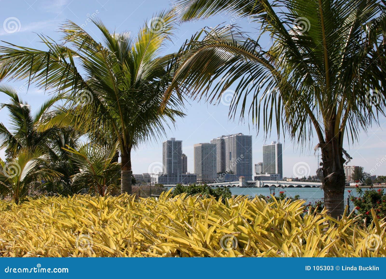 Hotéis de Miami através das palmeiras