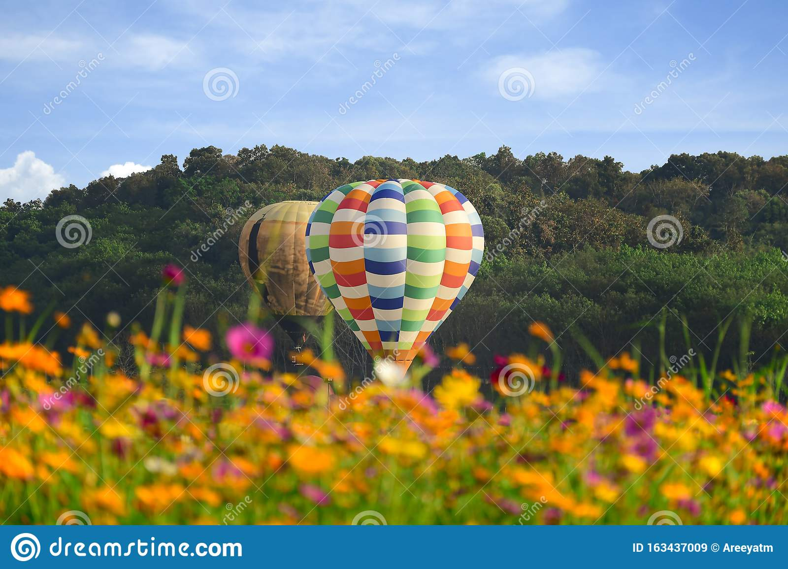 Hot air balloon and cosmos field over bright sky