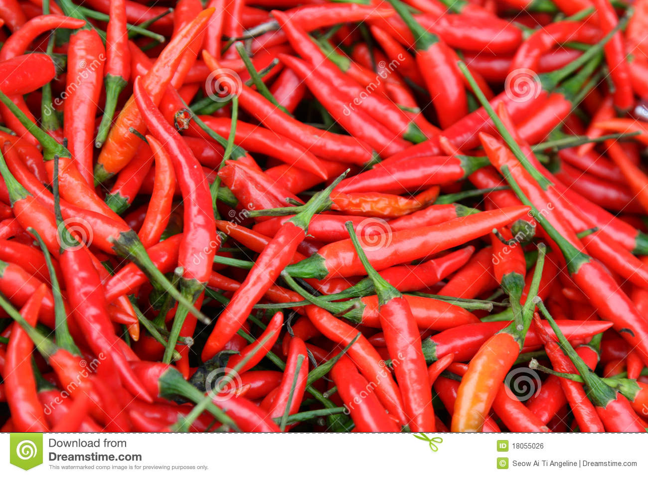 Hot Chillies stock photo  Image of bunch, many, close - 18055026