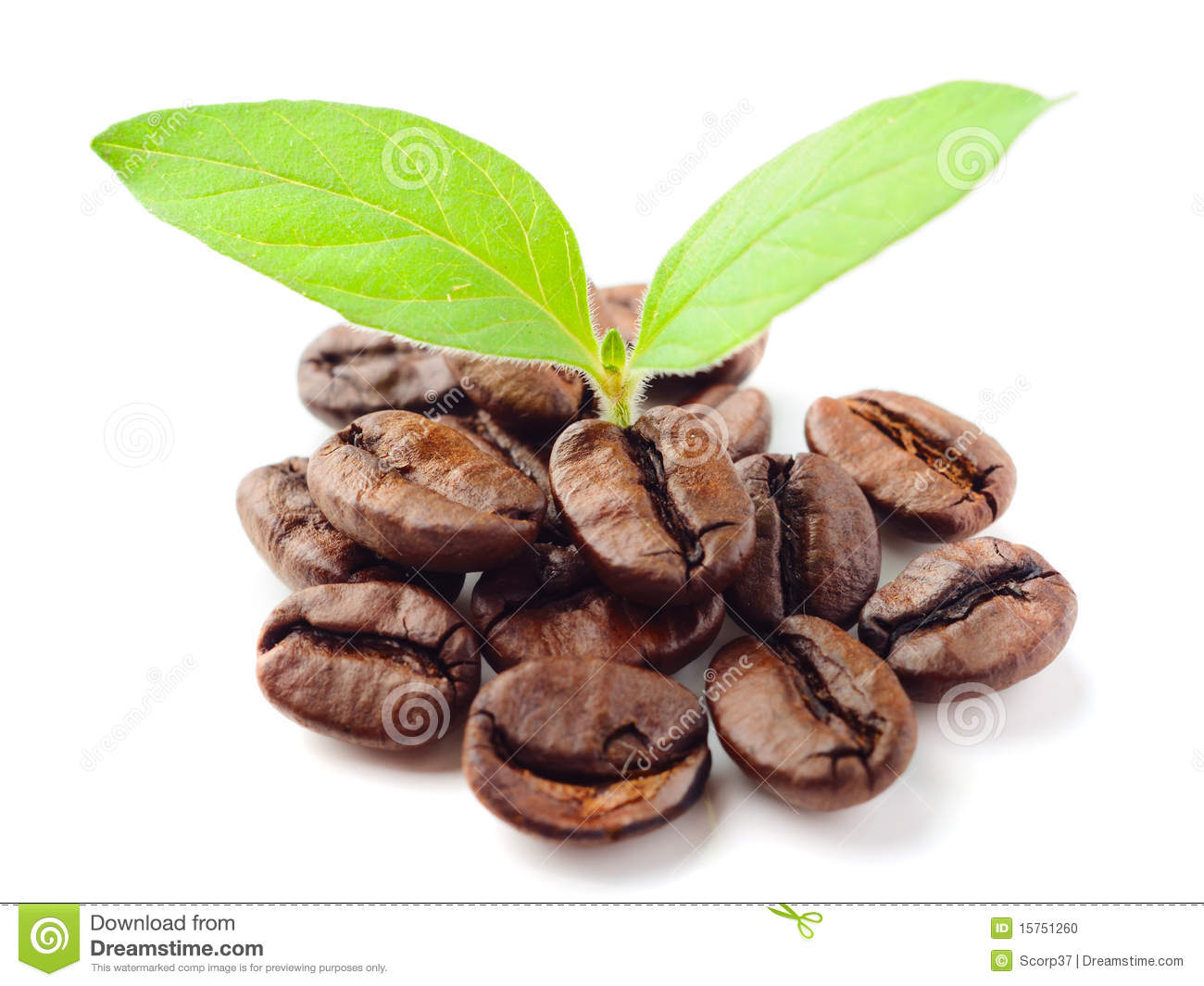 coffee bean tea leaf human resource management The coffee bean and tea leaf application online: jobs & career info  bean and tea leaf: barista, cashier, shift supervisor, assistant manager,  hiring personnel usually seek out determined yet laidback personalities for available jobs.