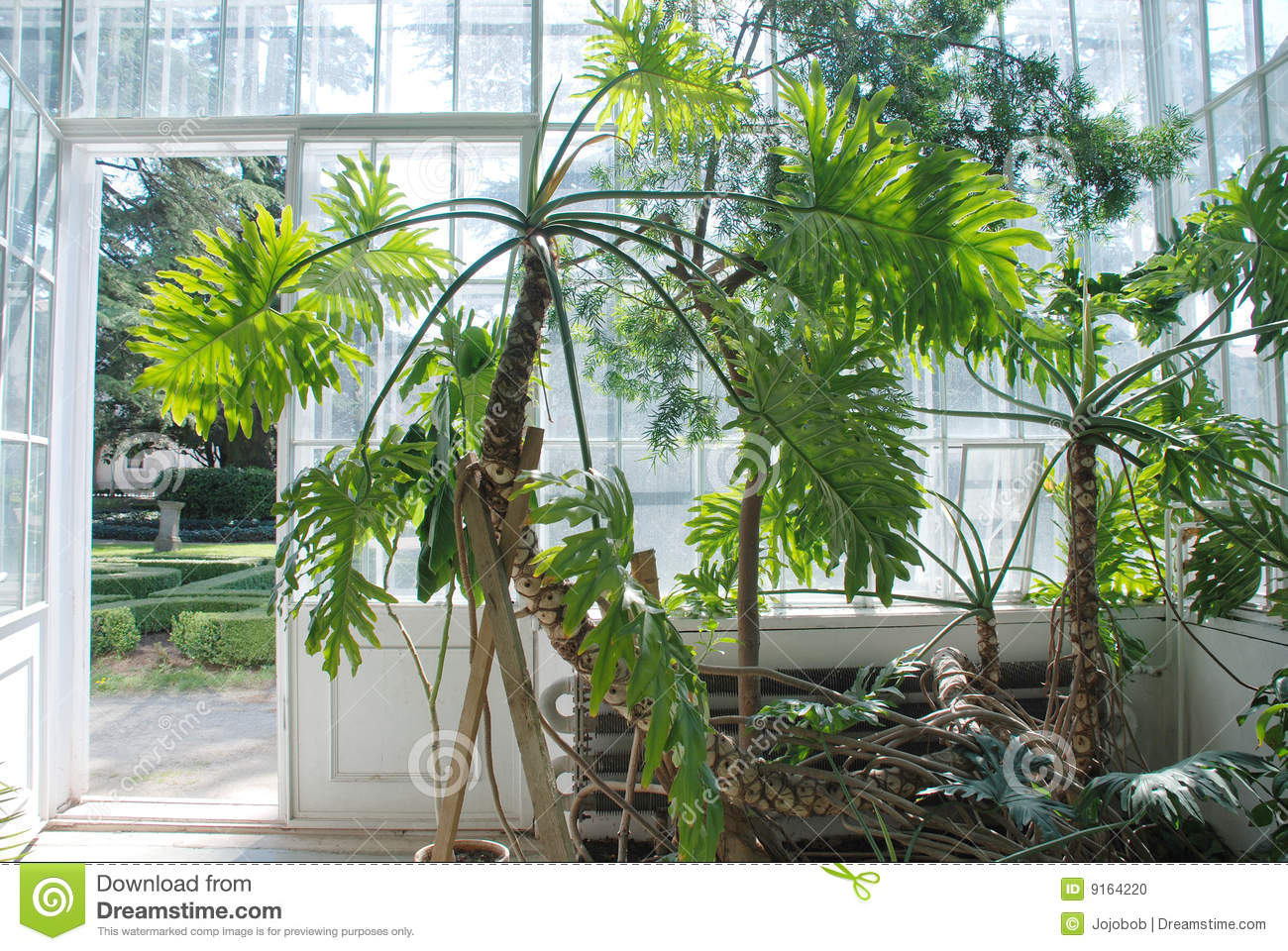 Hot House Plants By Door Stock Photo Image 9164220