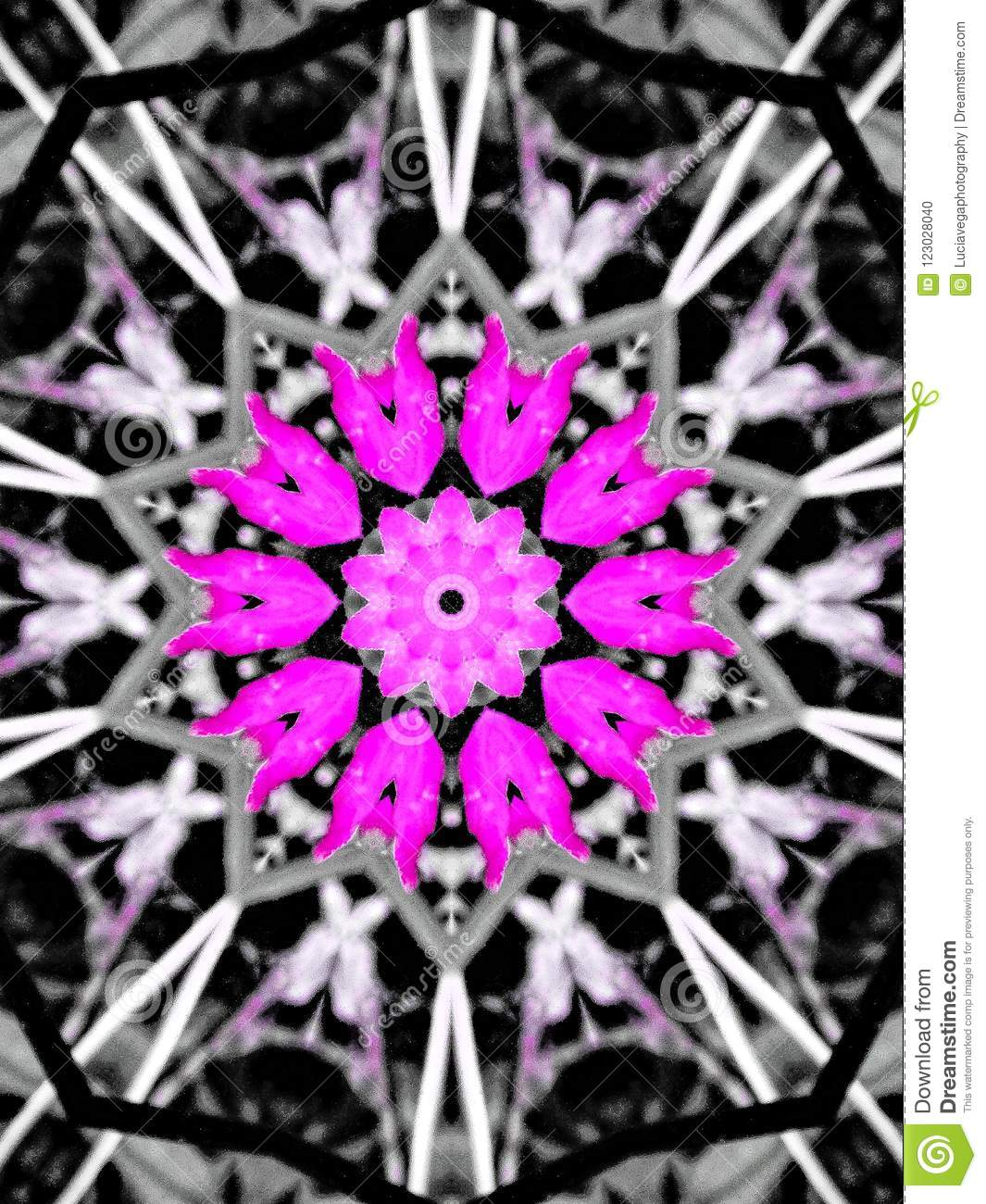 Hot Pink And Black Flower Mandala Stock Illustration Illustration