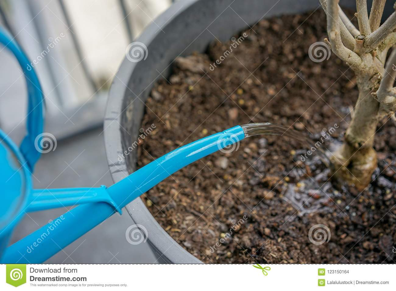 Blue Watering Can With Dry Plant In Flower Pot Stock Photo - Image ...