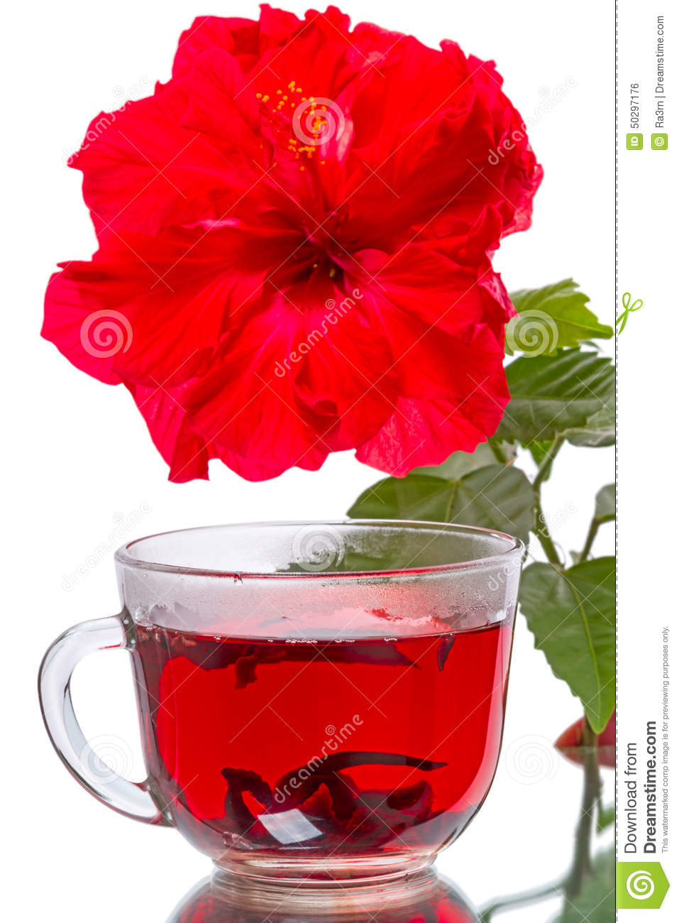 Hot tea and hibiscus flower stock photo image of isolated rosa download comp izmirmasajfo