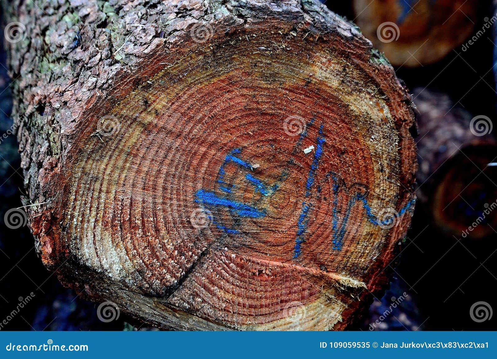 Hotat träd med den blåa beskrivningen, detalj, snitt, främre sikt, foto