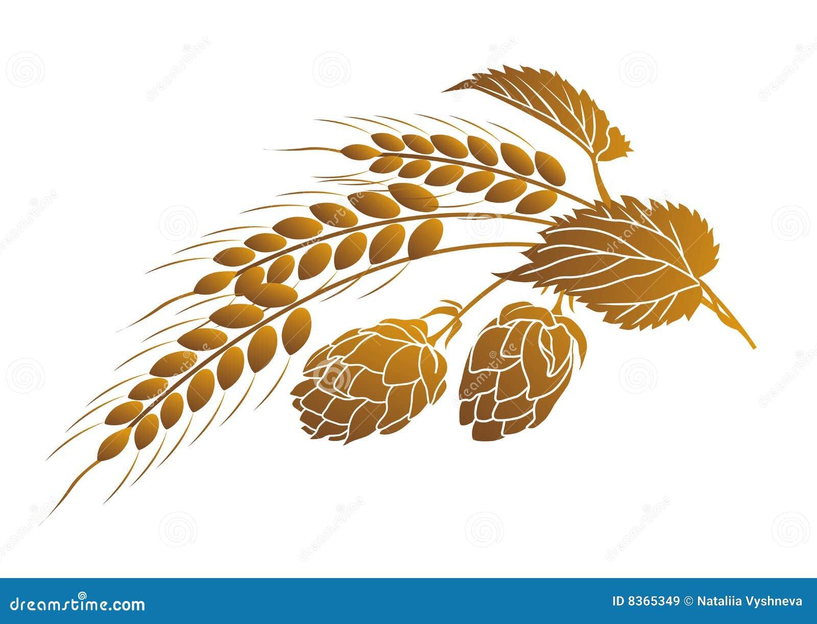 Houblon et blé