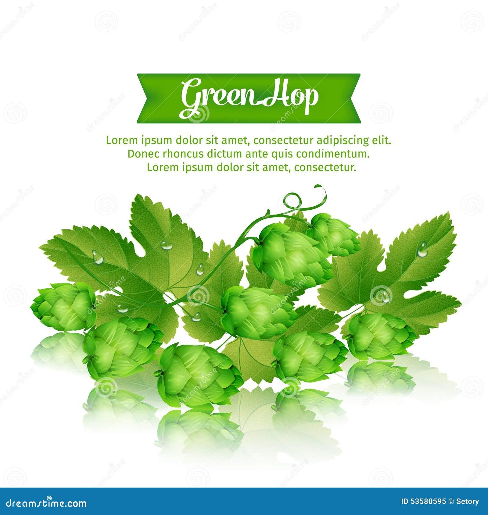 Houblon vert