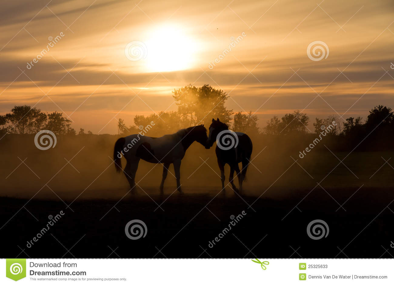 Houd van paarden