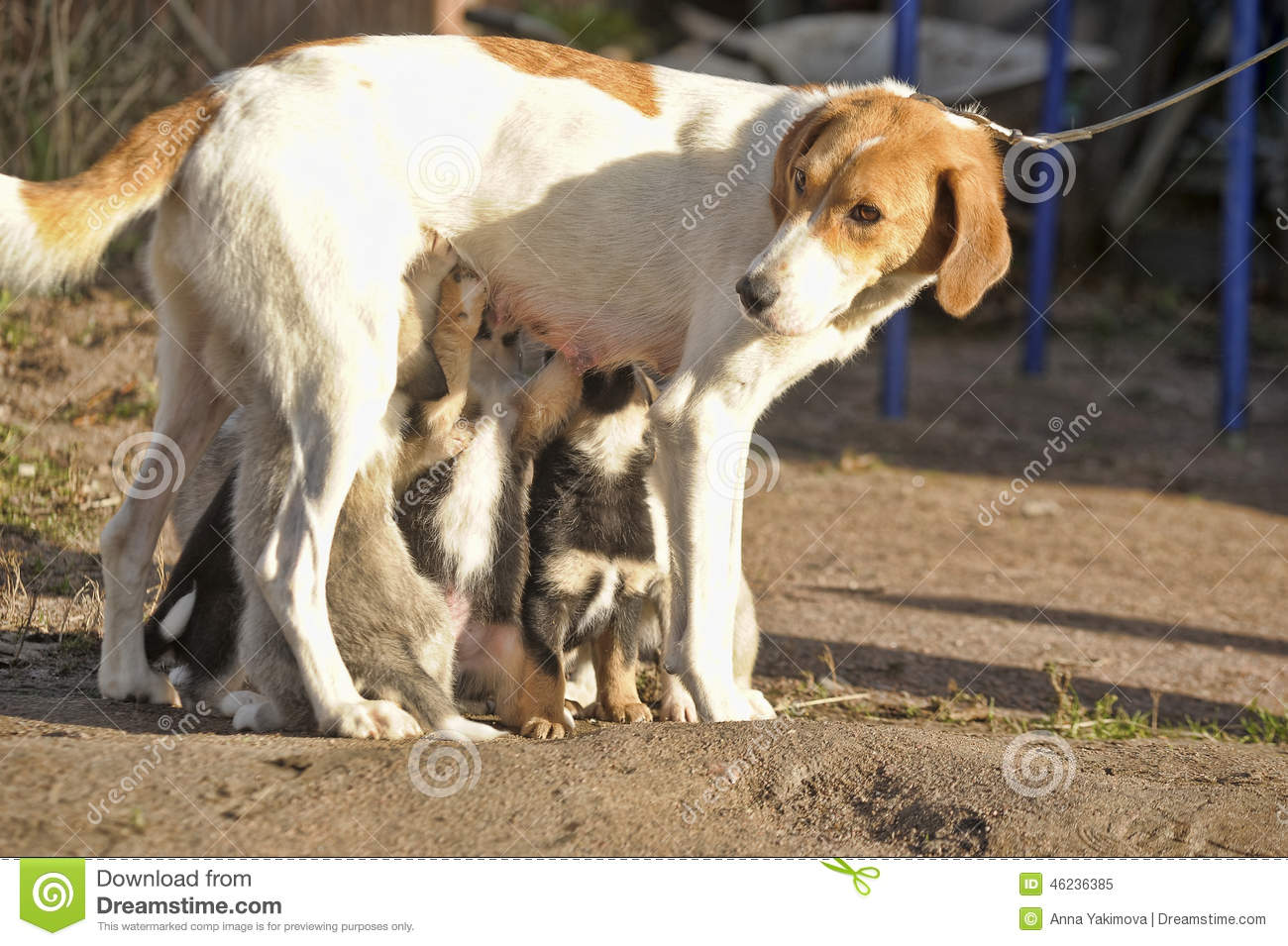 Can Dogs Drink Breast Milk