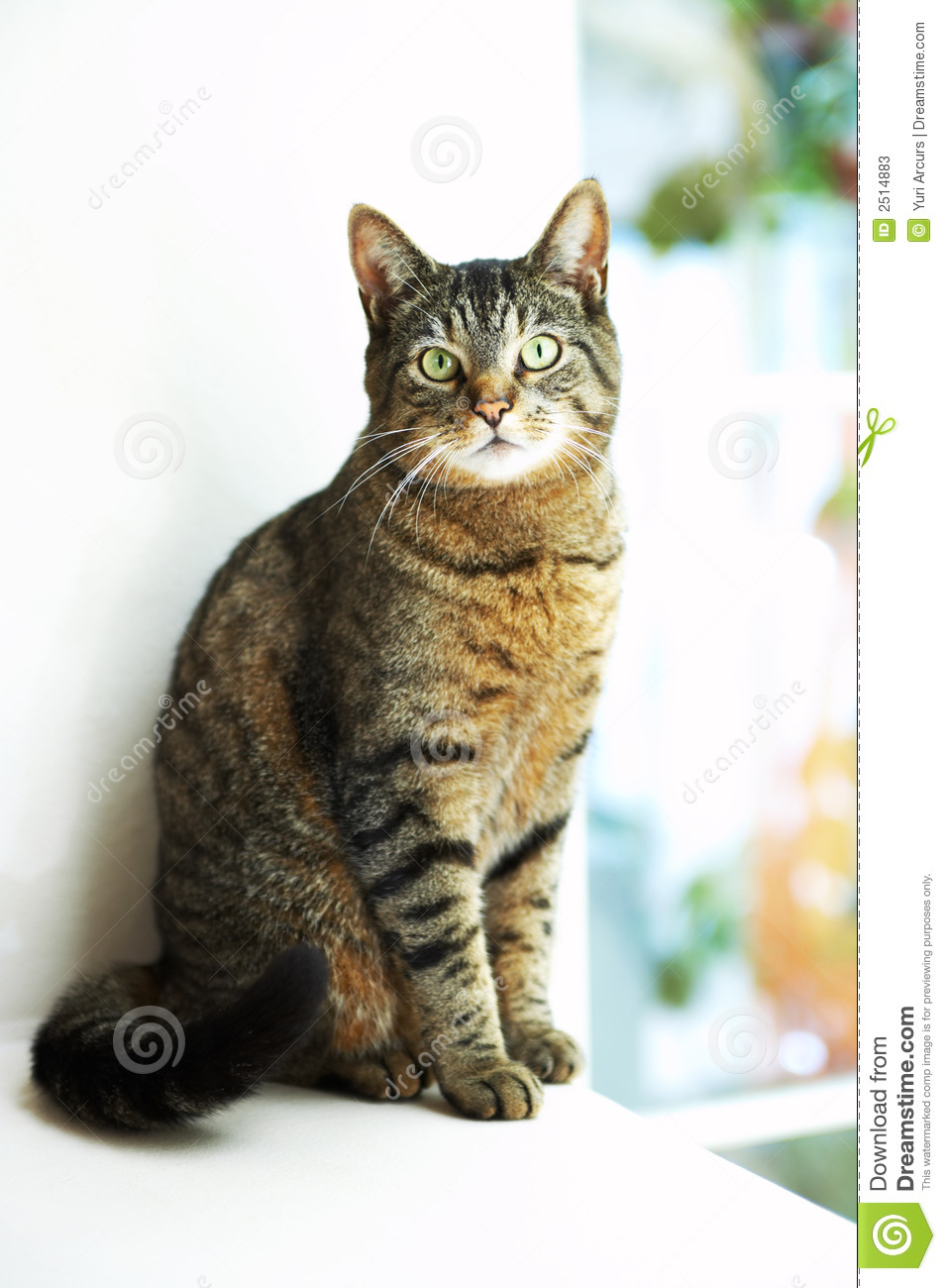 Stock Photos House Cat By Window Image 2514883