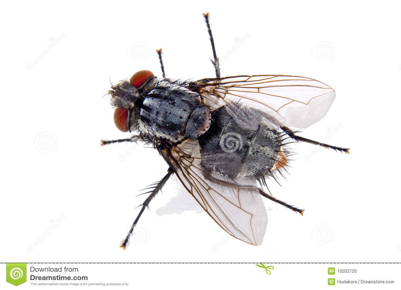 House Fly Stock Photo - Image: 10203720