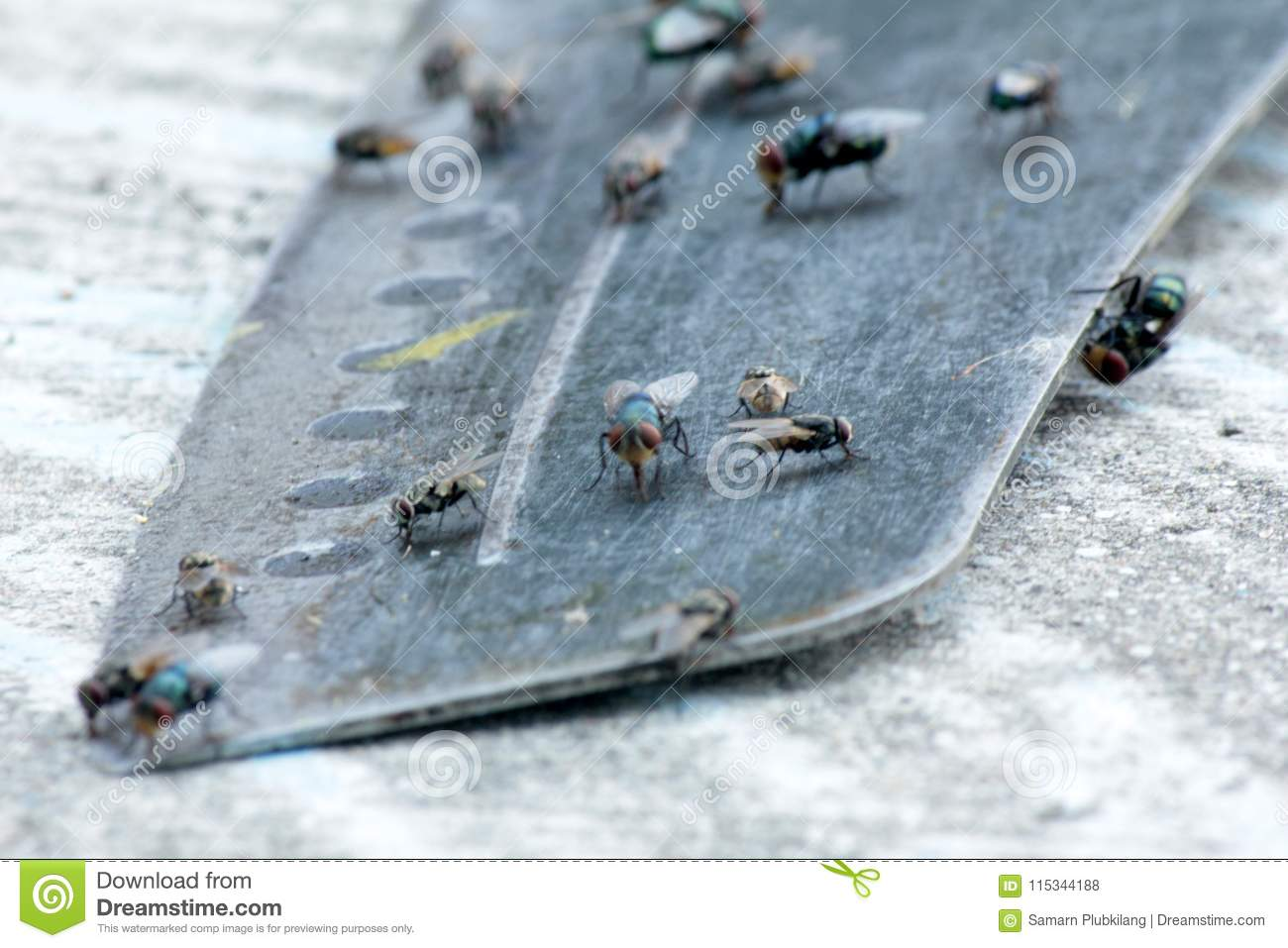 House Fly, Food Contamination Hygiene Concept. Stock Photo - Image ...