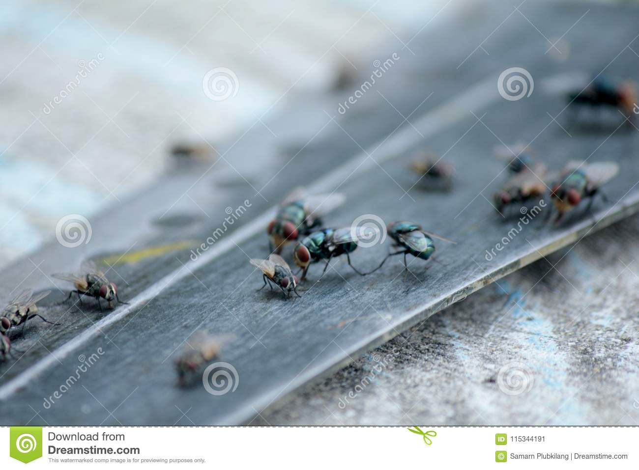 House Fly, Food Contamination Hygiene Concept. Stock Image - Image ...