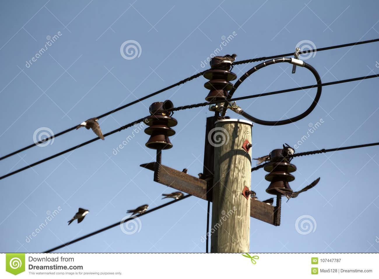House Martins on wires stock image. Image of habitat - 107447787