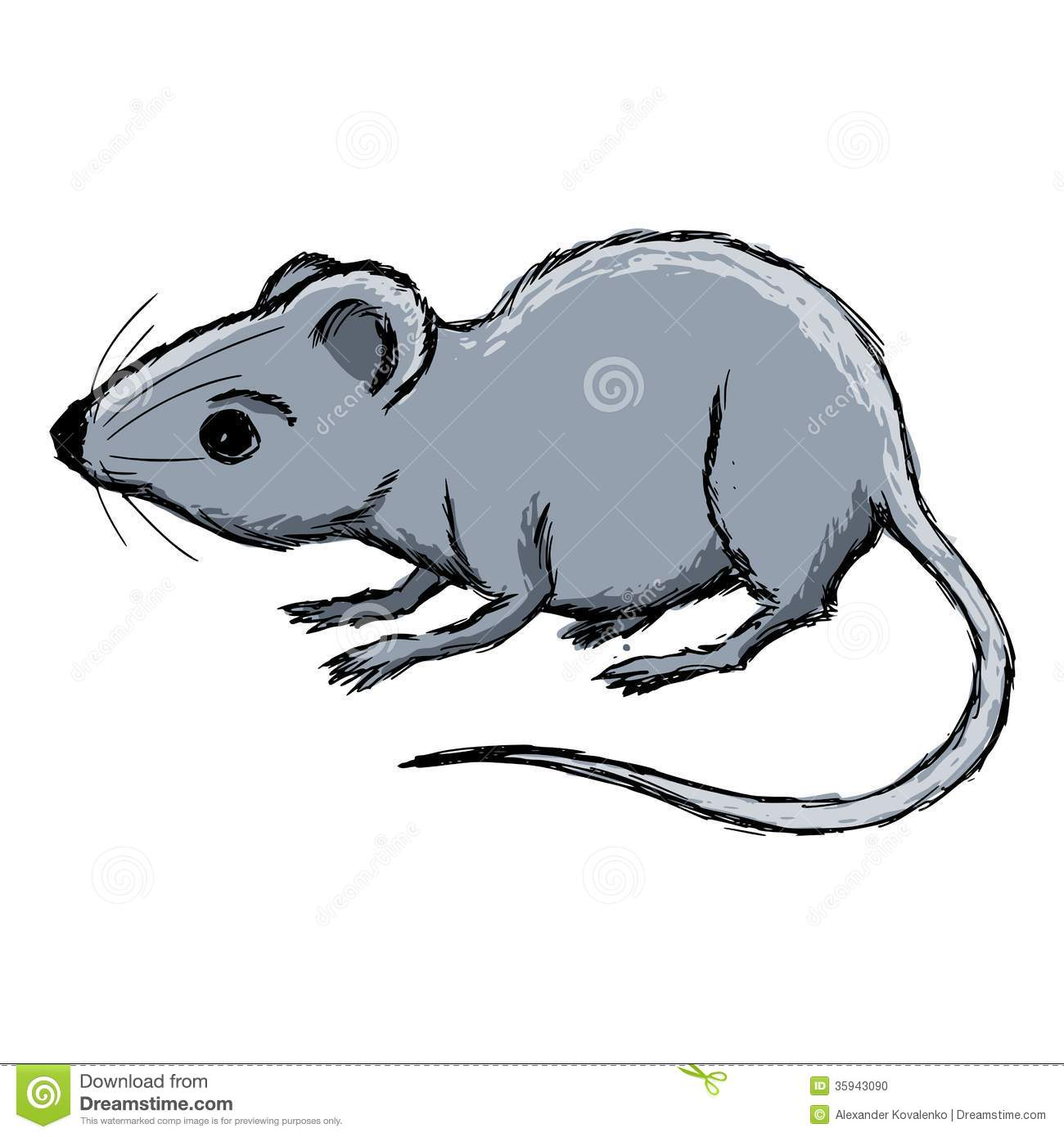 house mouse stock photo image 35943090