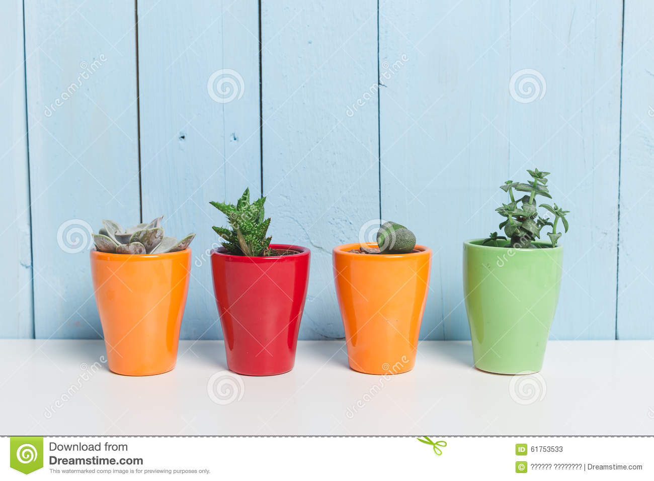 House plant stock photo image 61753533 - Colorful indoor plants ...