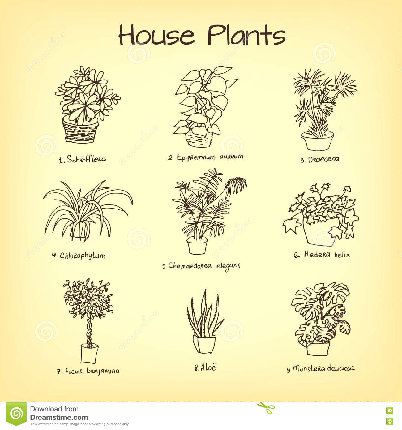 house plants drawing. royaltyfree vector download house plants drawing