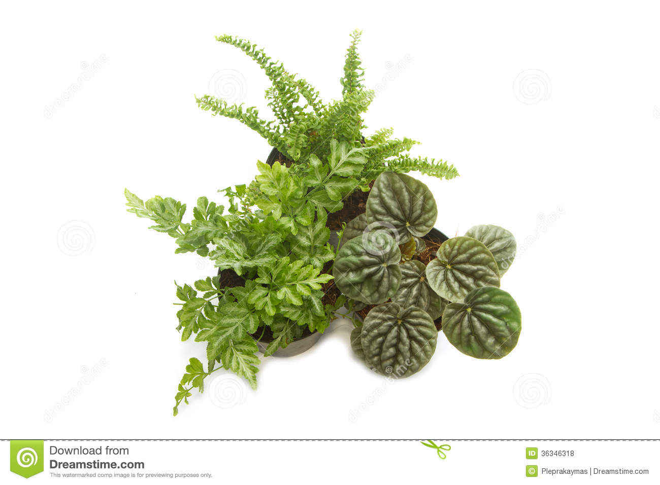 house plants with green leaves in pot stock photo   image