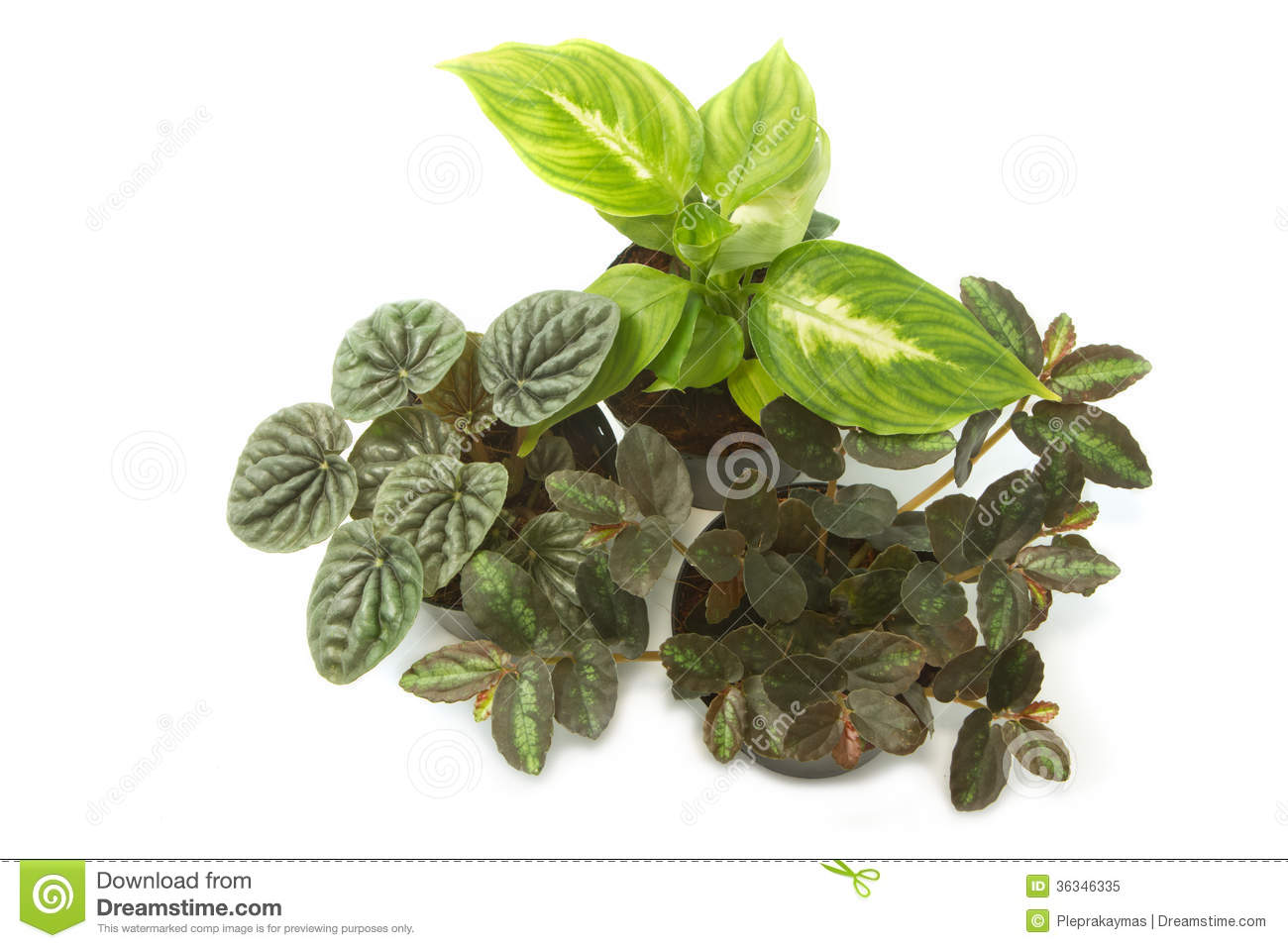 house plants with green leaves in pot royalty free stock