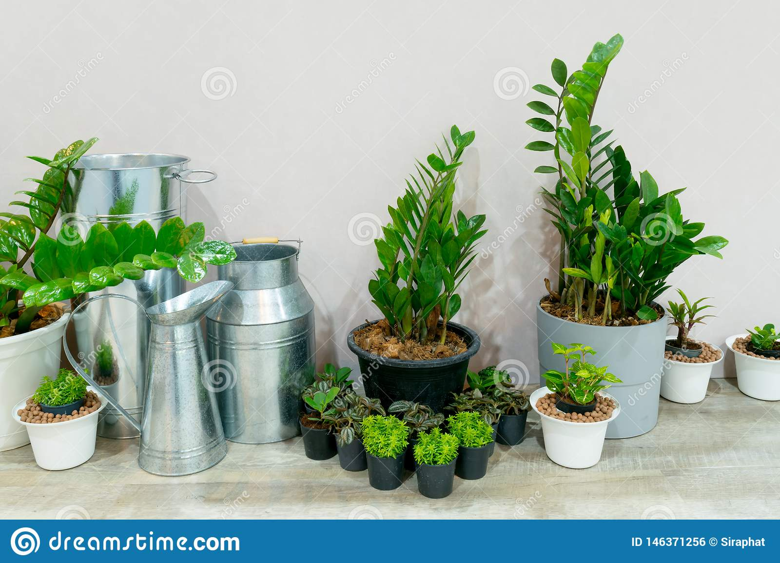 House Plants In Living Room Indoor Plant For Decorating The Room Stock Photo Image Of Beautiful Spring 146371256