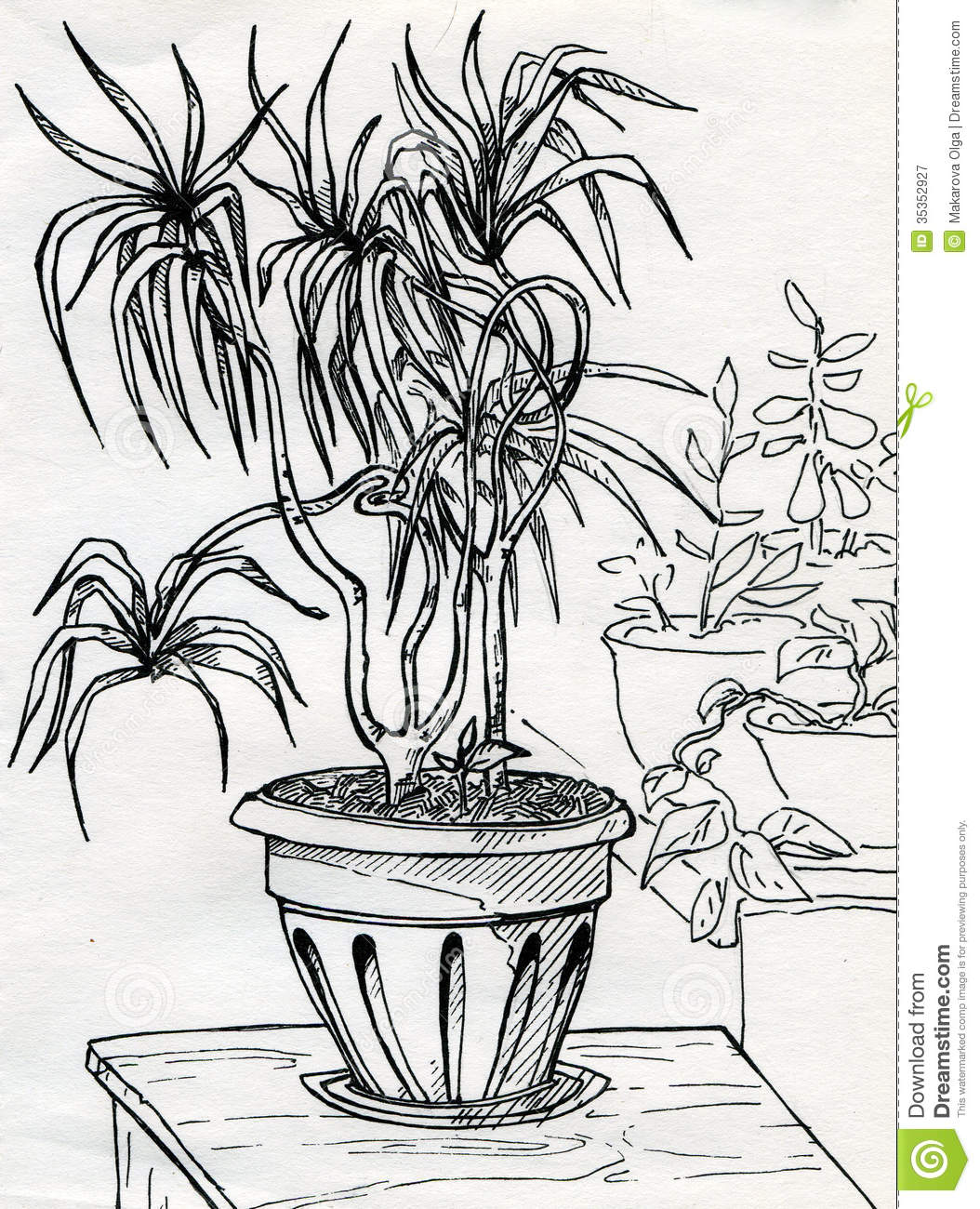 house plants drawing. royaltyfree stock photo download house plants drawing i