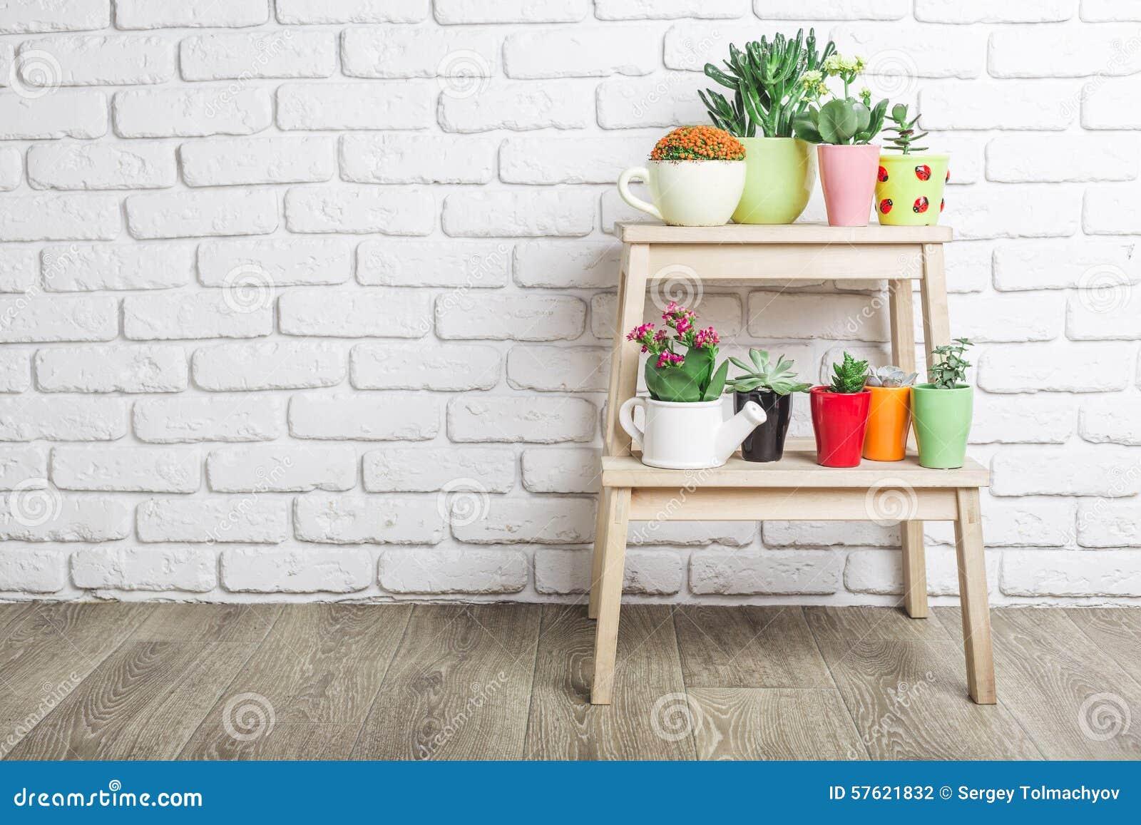 House Plants Succulents Stock Photo Image 57621832
